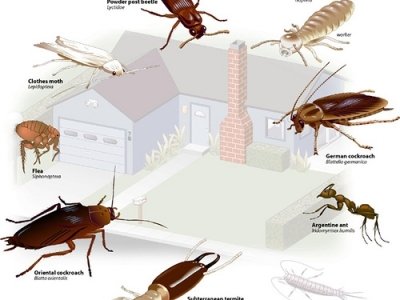 how to know where pests come from