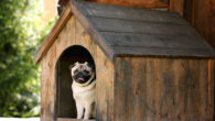 finding right kennels on dog friendly UK holidays
